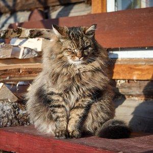 Бездомные коты признаны частью экосистемы в Днепре
