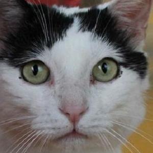 В Италии кот получил 1,5 млн евро в наследство
