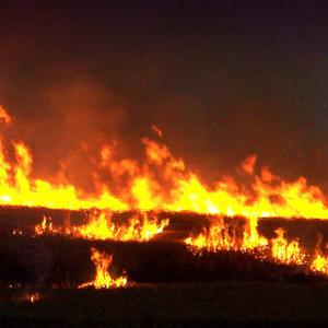 Во Львовской области сожгли лагерь ромов - омбудсмен