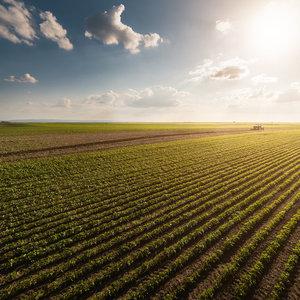 МВФ: Открывать рынок земли нужно правильным способом