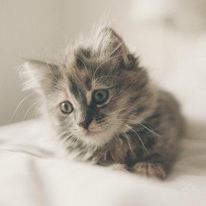 В Китае запускают услугу массового клонирования кошек: фото