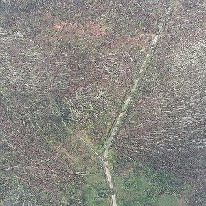 В Житомирской области смерч повалил 100 гектаров леса: видео