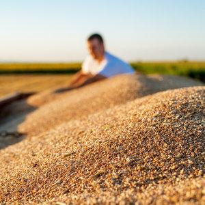 В первом полугодии украинский аграрный экспорт превысил $10 млрд