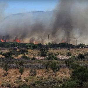 Грецию охватили лесные пожары, эвакуируют тысячи туристов: видео