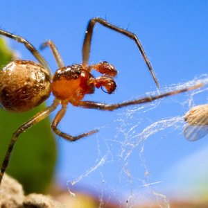 Nature: Глобальное потепление ведет к рождению агрессивных пауков