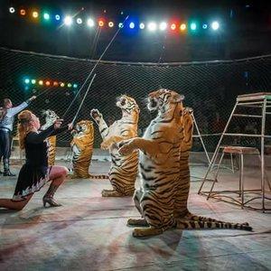 Впервые в Украине суд запретил цирку эксплуатировать животных