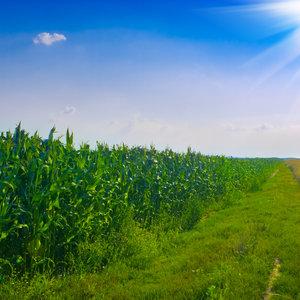 Фермерам помогут купить землю. Что рассказал замминистра Высоцкий