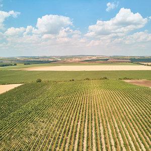 У Аграрной академии наук заберут более 80% земель